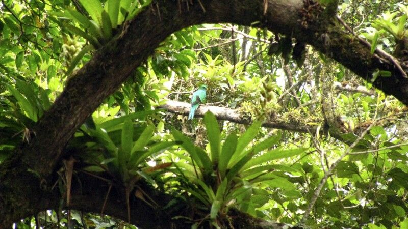 Quetzal-Weibchen © Diamir