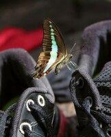 Schmetterling auf Wanderschuh_Singharaja Garden Eco Lodge
