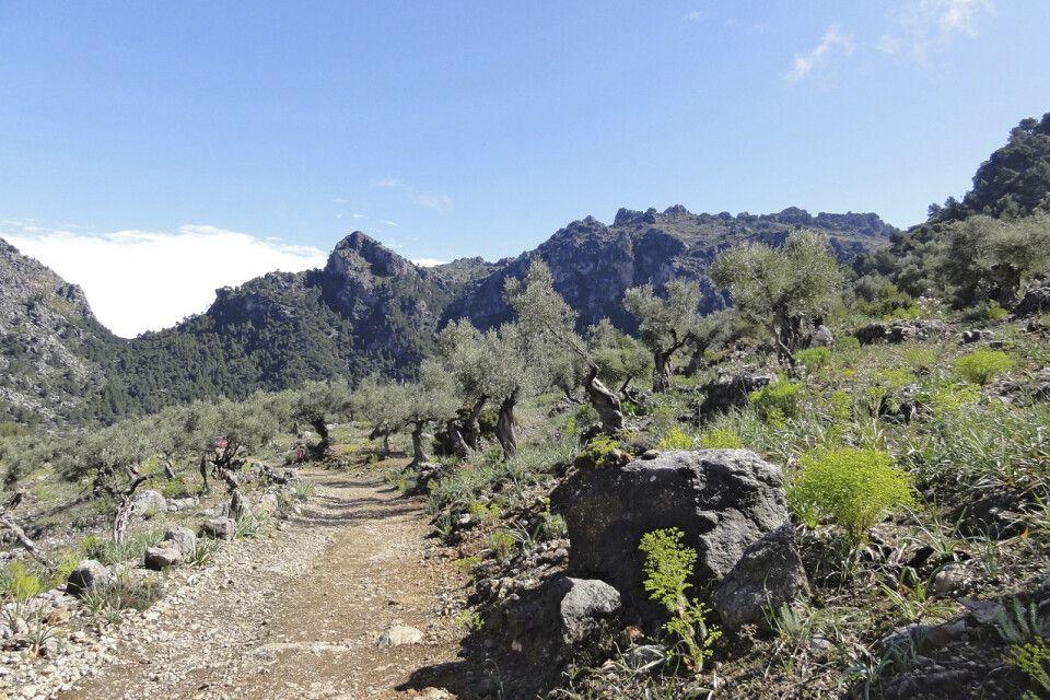 Wanderung durchs Olivenbaumtal
