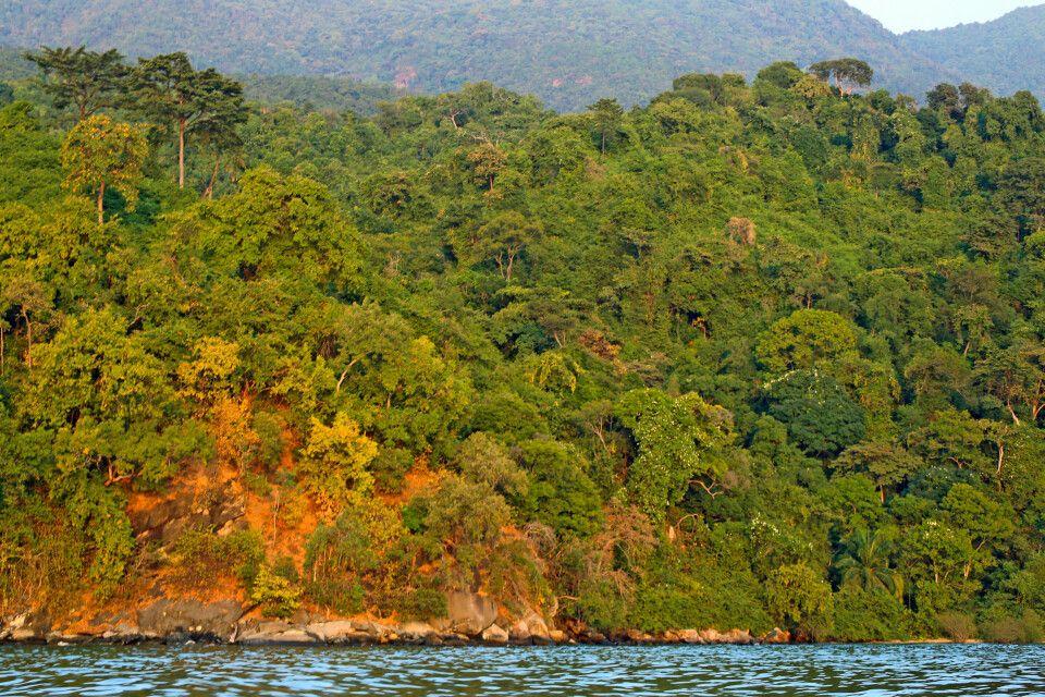 Üppiger Regenwald am Tanganyika-See, die Heimat der Schimpansen