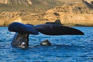 Walbeobachtung auf der Halbinsel Valdes