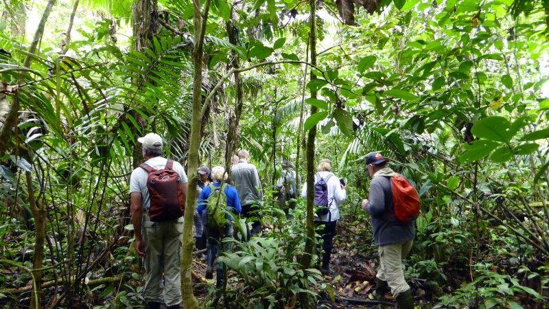 Entdeckungstour im Dschungel des Cuyabeno-Nationalparks © Diamir