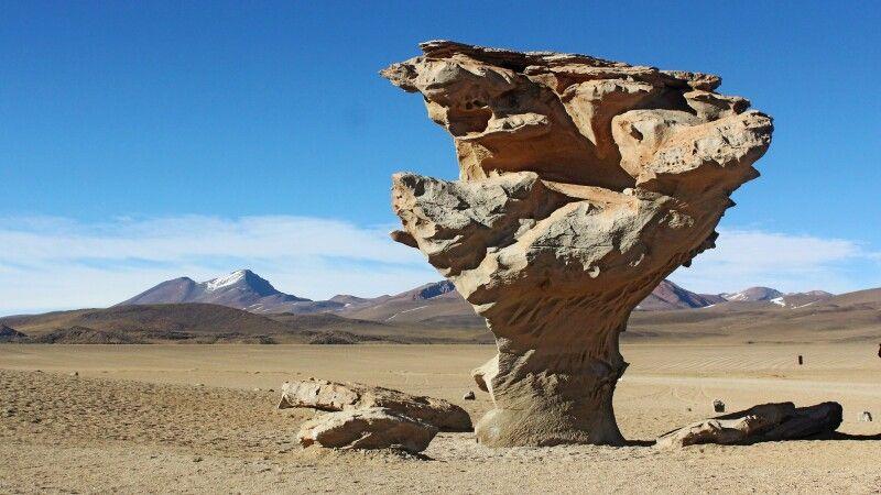 Steinbaum Arbol de Piedra © Diamir