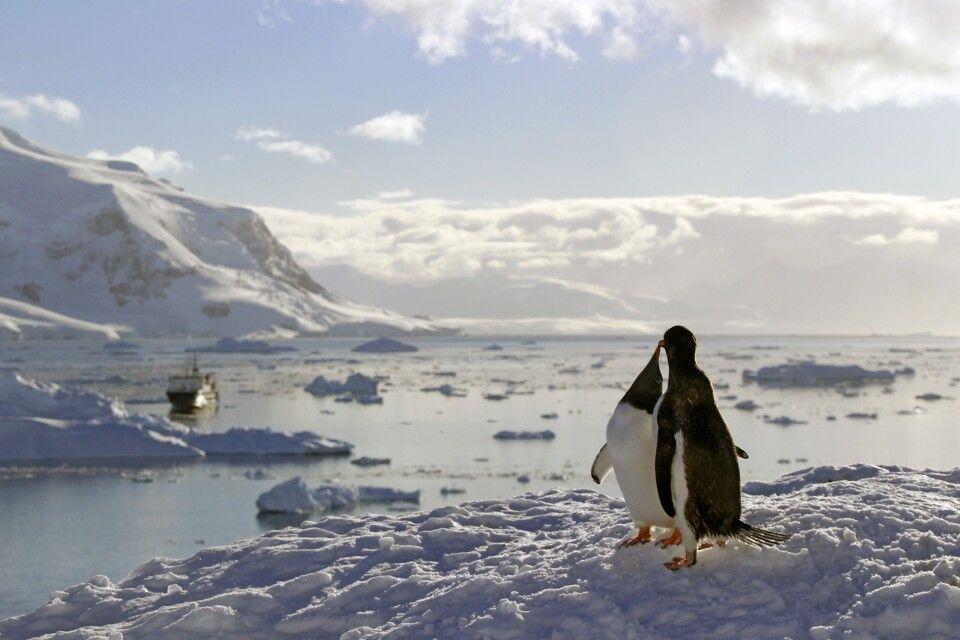 Pinguinpaar vor eisiger Kulisse mit Ortelius