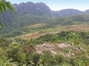Blick auf Reisterrassen im Pu Luong Naturreservat
