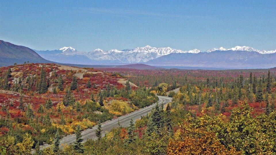 Alaskakette in leuchtenden Herbstfarben