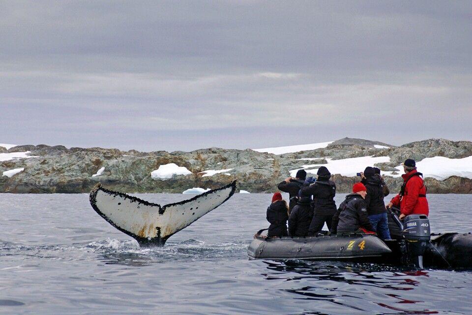 Zodiactour mit spektakulärer Walbegegnung