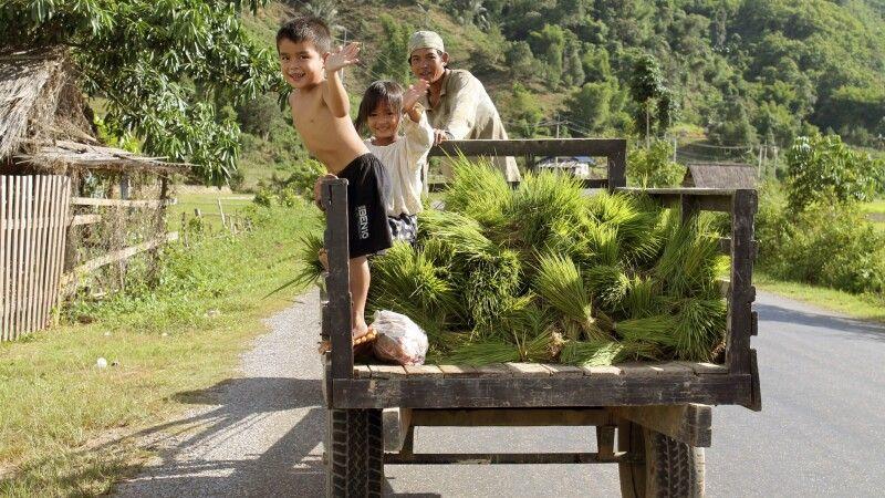 Verbringen der Setzlinge aufs Feld in fröhlicher Gesellschaft © Diamir