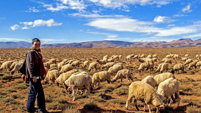 junger Berber mit Schafen © Diamir