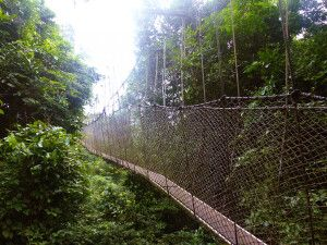 Ghana, Nationalpark, CAnopy, Walkway