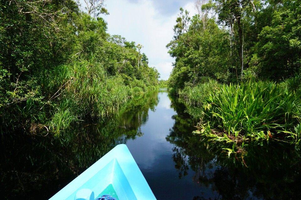 Spiegel des Paradies – Tanjung Puting NP