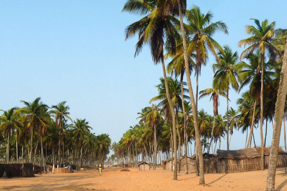 Ouidah, Strandstrasse, Palmen