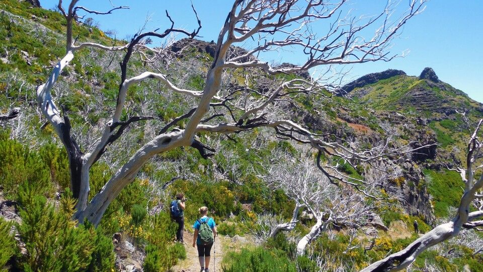 Wanderung im Gebiet des Pico Ruivo und Arieiro