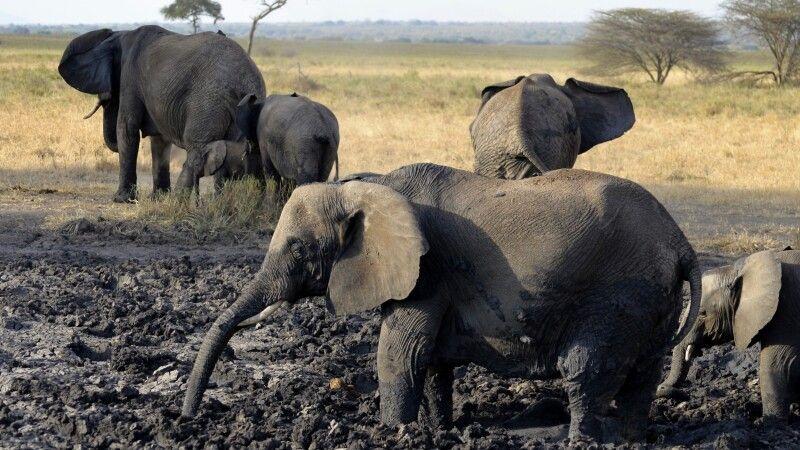 Elefanten beim Schlammbad © Diamir