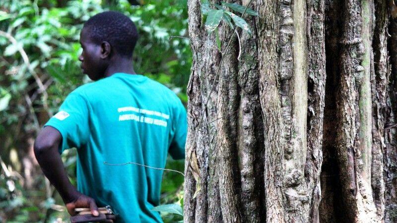 Moribane-Waldreservat am Fuß des Chimanimani-Berglandes © Diamir