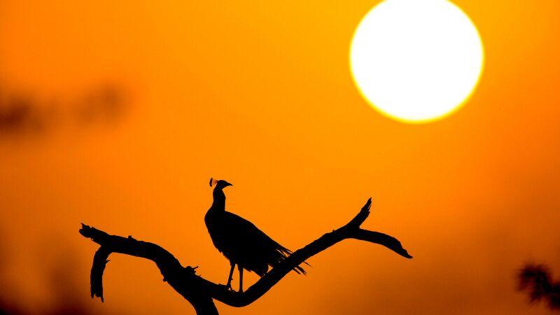 Sonnenuntergang in Nationalpark © Diamir
