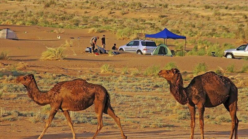 Camping mit Kamelen © Diamir