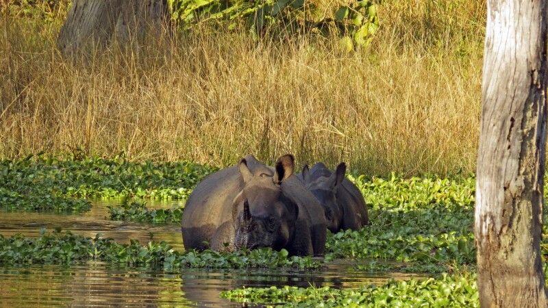 Nashörner beim Baden © Diamir