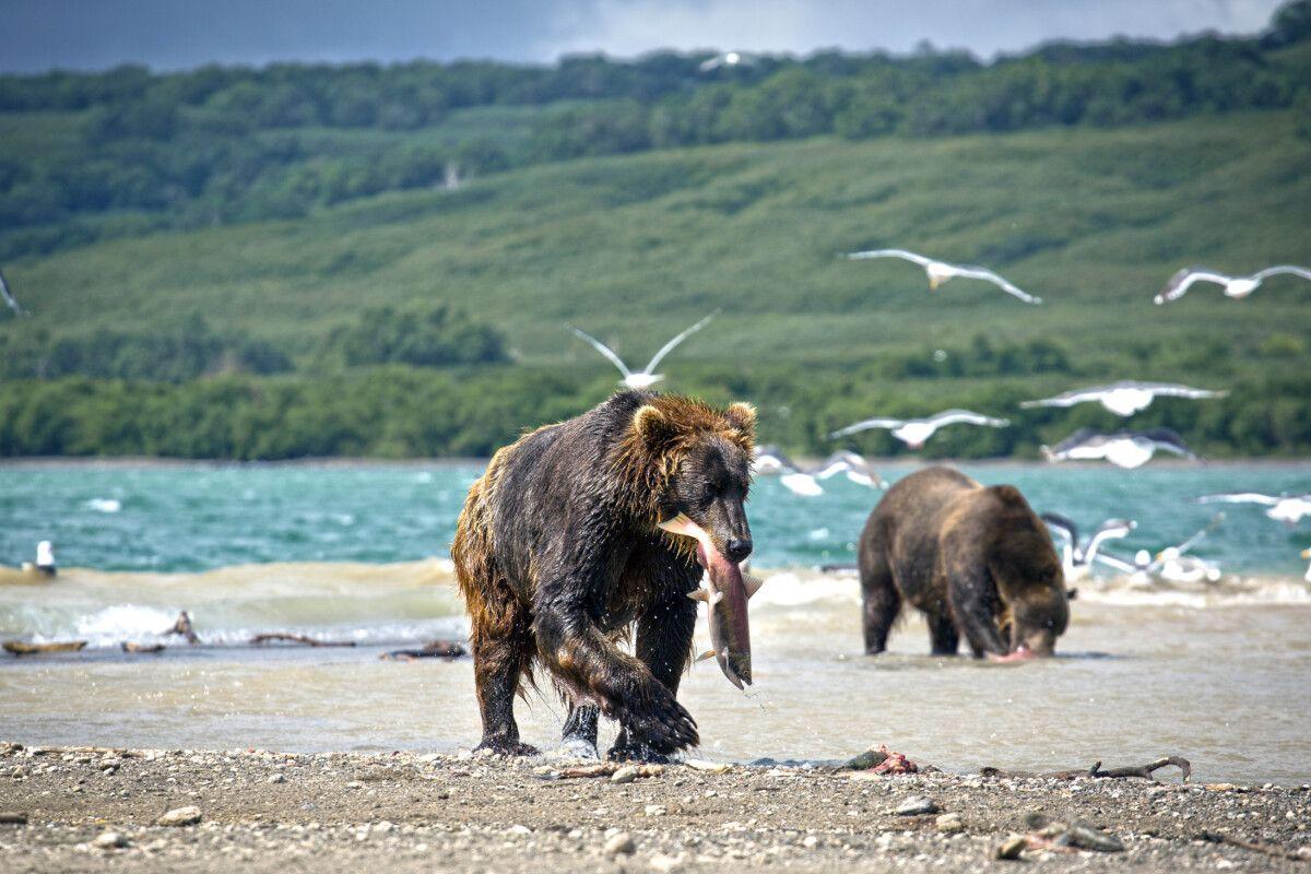 Russland – Kamtschatka – 14 Tage Natur- und Fotorundreise
