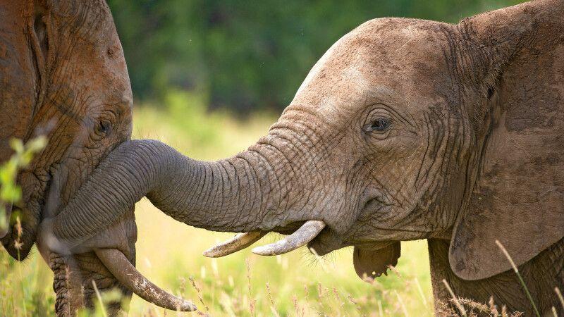 Elefanten © Diamir