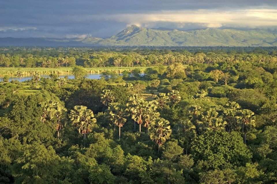 Panoramablick auf den Liwonde-Nationalpark