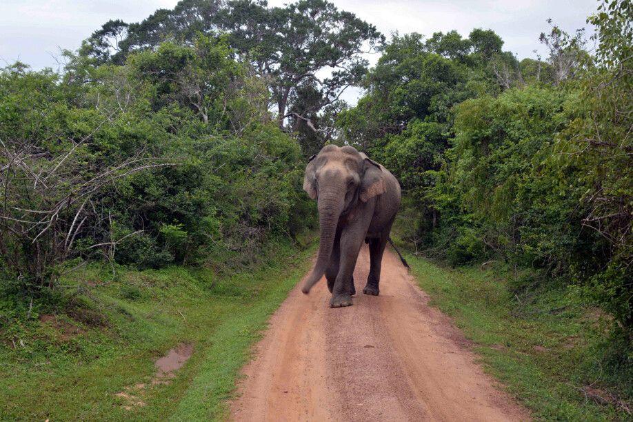 Elefant vor der Linse