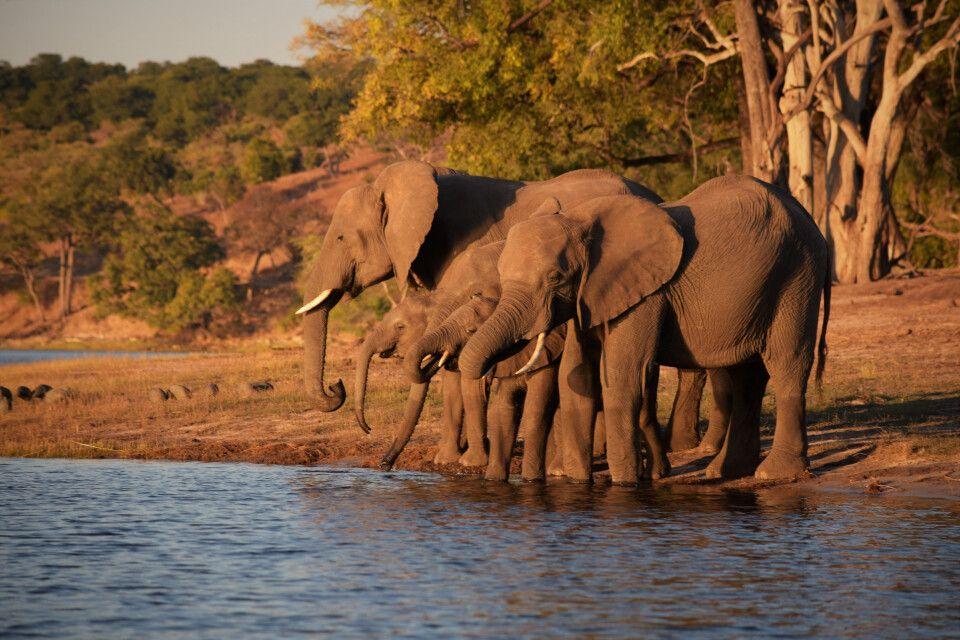 Im Chobe-Nationalpark