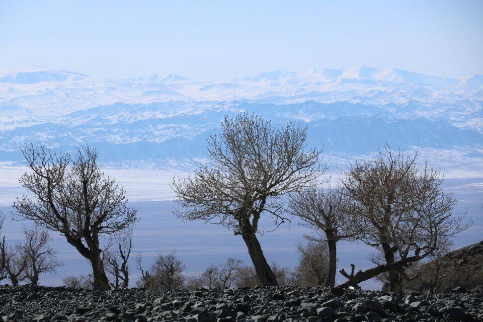 Baumgruppe in Jargalant-Bergen