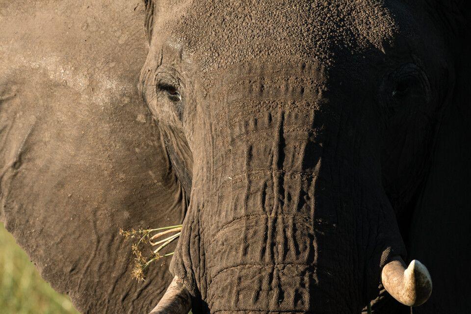 Elefant im Abendlicht