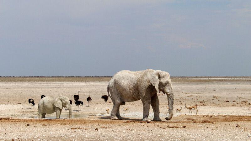 Elefant mit Jungtier im Etosha NP © Diamir