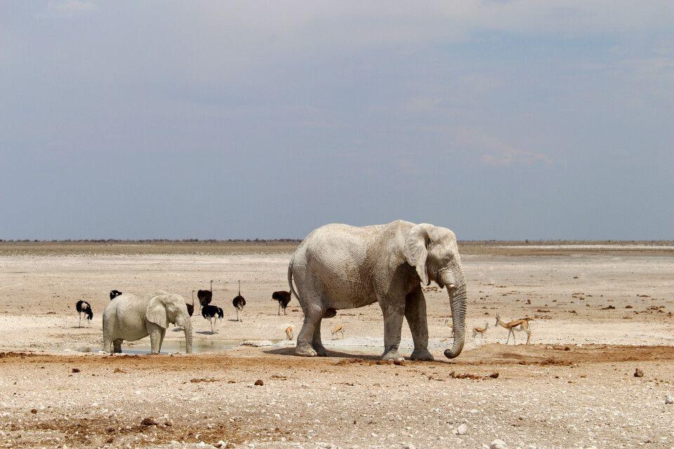 Elefant mit Jungtier im Etosha NP