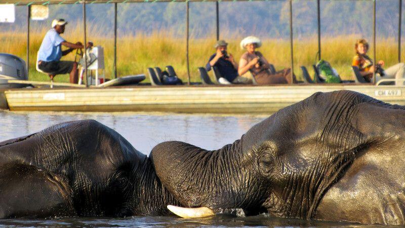 Bootsfahrt auf dem Chobe-Fluss © Diamir