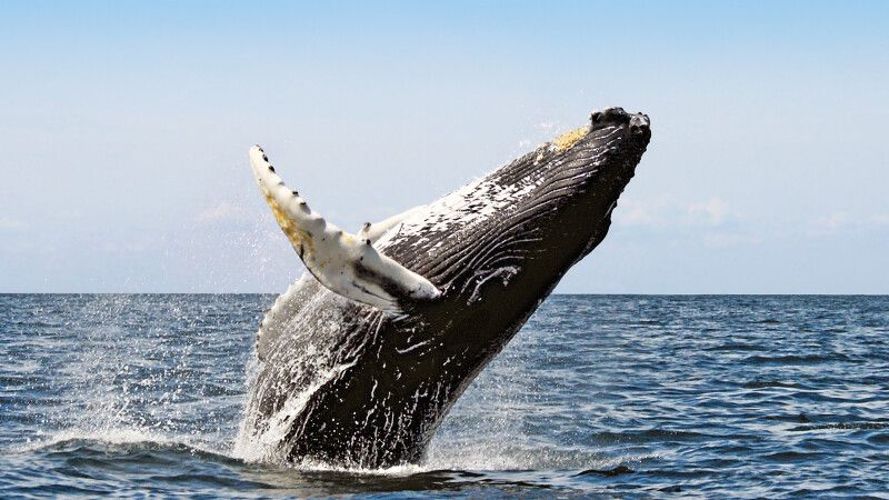 Walbeobachtung vor Hermanus © Diamir