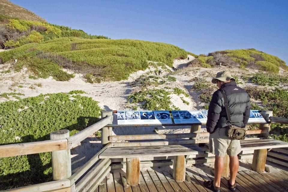 Boulders Beach, in der Nähe von Kapstadt