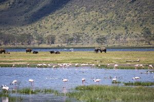 Lake-Nakuru-Nationalpark bietet einmalige Naturschauspiele