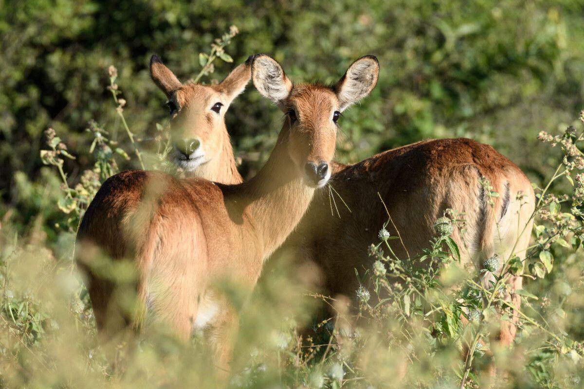 botswana safaritraum f r naturfotografen mit sandra petrowitz diamir fotoreisen in ber. Black Bedroom Furniture Sets. Home Design Ideas