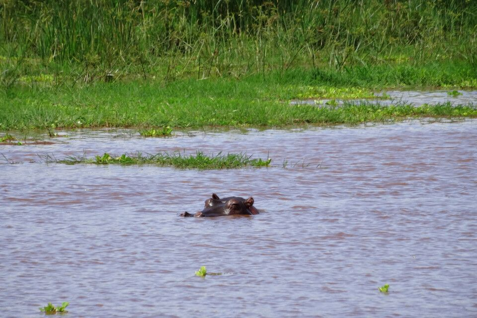 Lake Manyara NP