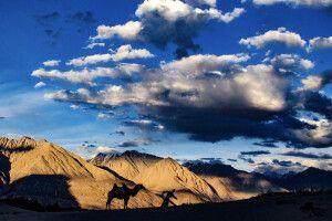 Sanddünen von Hundar im Nubra Valley