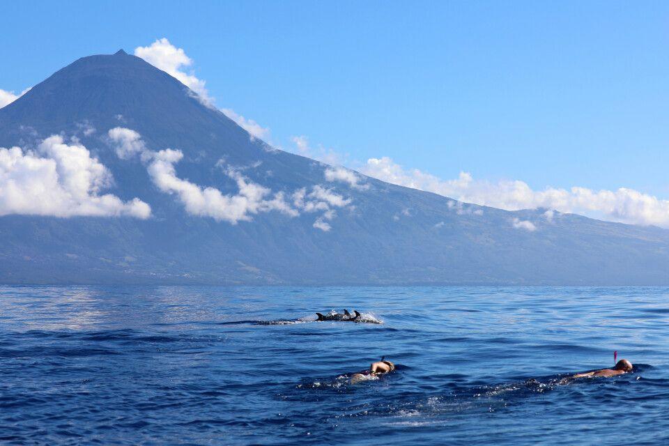 Schnorcheln mit Delfinen vor der Kulisse des Pico