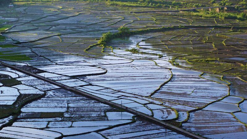 Reisfeldmosaik in Vietnam © Diamir