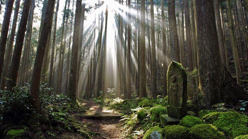 Mystische Wälder entlang des Kumano Kodo Pilgerweges © Diamir
