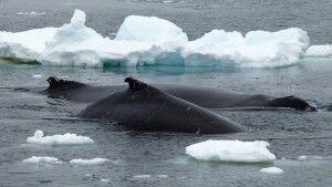 Walbeobachtung hautnah