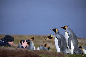 Pinguine aus allen fotografischen Perspektiven