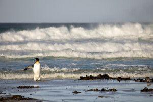 Hohe Wellen an den Stränden der Falkland Inseln
