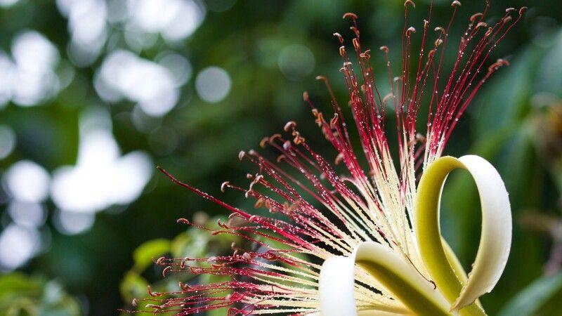 Pflanze © Diamir