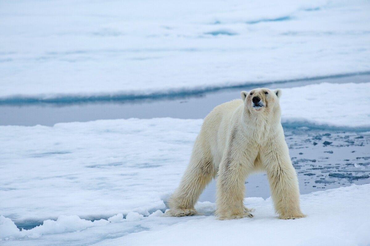 Spitzbergen – 8 Tage Expeditionskreuzfahrt Nordwestspitzbergen