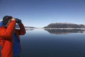 Auf der Suche nach Walen und Seevögeln
